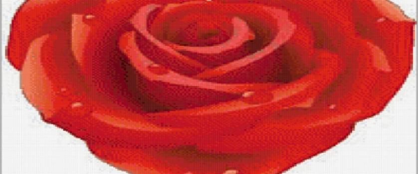 «Сердце розы»