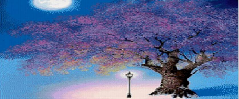 «Ночная-сакура»